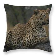 An Alert Leopard Rests On A Fallen Tree Throw Pillow