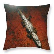 An Alligator Walks On The Muddy Bottom Throw Pillow