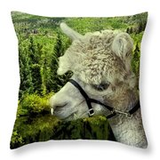 An Alpaca In Vail Throw Pillow