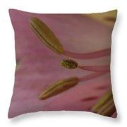An Alstroemeria Abelia Grandiflora Throw Pillow