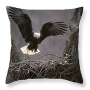 An American Bald Eagle Flies Throw Pillow