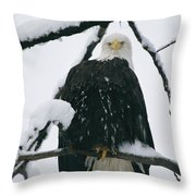 An American Bald Eagle Perched Throw Pillow