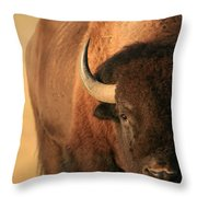 An American Bison In The Early Morning Throw Pillow