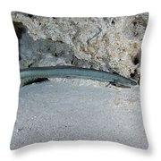 An American Eel Prowls Along The Edge Throw Pillow