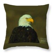 An Eagle Close Up  Throw Pillow