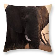 An Elephant In The Okavango Delta Throw Pillow