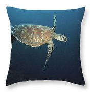 An Endangered Green Sea Turtle Swimming Throw Pillow