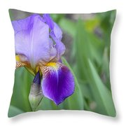 An Iris Blossom Throw Pillow