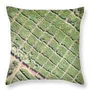 An Irrigated Industrial Sugar Throw Pillow