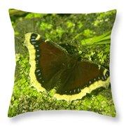 An October Butterfly  Throw Pillow