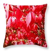 An Ohhh Fall Color Throw Pillow