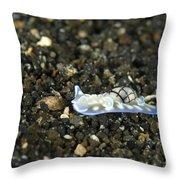 An Opisthobranch On Volcanic Sand Throw Pillow
