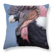 Andean Condor Vultur Gryphus Adult Male Throw Pillow