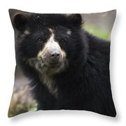 Andean Or Spectacled Bear, Tremarctos Throw Pillow
