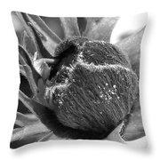 Anemone De Caen Or Poppy Anemone Throw Pillow