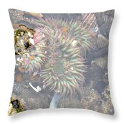 Anemones And Shells Throw Pillow