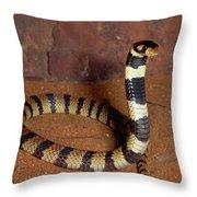 Angolan Coral Snake Defensive Display Throw Pillow