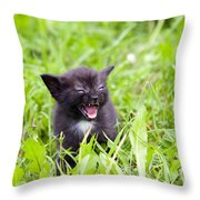Angry Kitten Throw Pillow