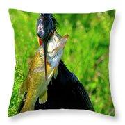 Anhinga And The Fish Throw Pillow