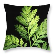 Annual Wormwood Throw Pillow