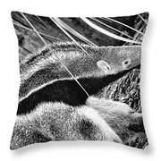 Ant Eater Throw Pillow