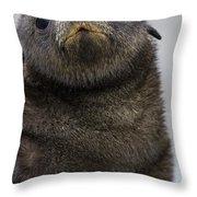 Antarctic Fur Seal Arctocephalus Throw Pillow
