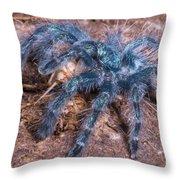 Antilles Pinktoe Tarantula Throw Pillow