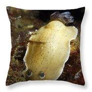 Aphelodoris Varia Sea Slug Nudibranch Throw Pillow