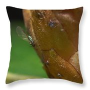 Aphid Throw Pillow