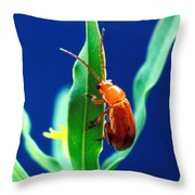 Aphthona Flava Flea Beetle On Leafy Throw Pillow