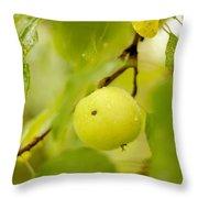 Apple Taste Of Summer Throw Pillow