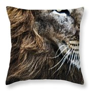 Aramis Throw Pillow by Elizabeth Hart