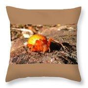 Araneus Marmoeus Throw Pillow