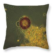 Arcella Lm Throw Pillow by Eric V. Grave