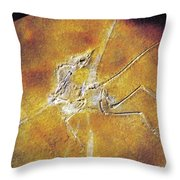 Archaeopteryx Lithographica Throw Pillow
