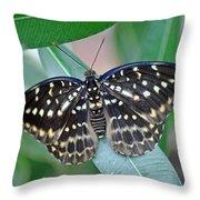 Archduke Butterfly Throw Pillow