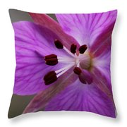 Arctic Riverbeauty Throw Pillow