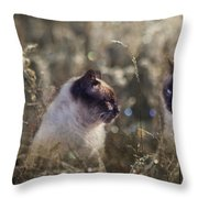 Are You Dreaming About Me - Siamese Feral Cat Throw Pillow