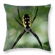 Argiope Throw Pillow