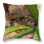 Arizona Rattler Throw Pillow