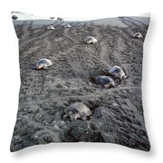 Arribada Of Olive Ridley Turtles, Costa Throw Pillow