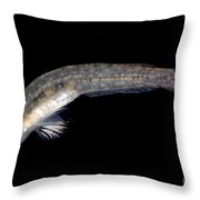 Arrow Goby Throw Pillow
