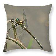 Arrowhead Spiketail Dragonfly - Cordulegaster Obliqua Throw Pillow