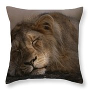 Asian Lion Panthera Leo Persica Throw Pillow