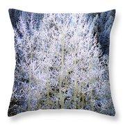 Aspen Lace Throw Pillow