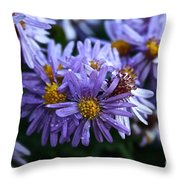 Aster Dew Drops Throw Pillow