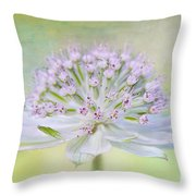 Astrantia Art Throw Pillow by Jacky Parker
