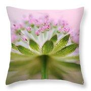 Astrantia Splash Throw Pillow
