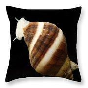 Atlantic Dogwhelk Throw Pillow