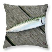 Atlantic Mackerel Scomber Scombrus Throw Pillow